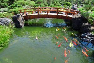 fish pool.1