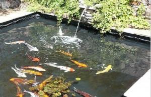 fish pool.2